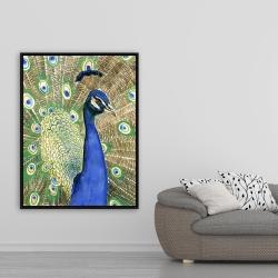 Framed 36 x 48 - Peacock