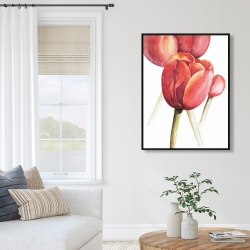 Framed 36 x 48 - Blossoming tulips closeup