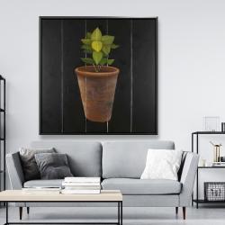 Framed 48 x 48 - Plant of bay leaves