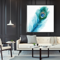 Framed 48 x 48 - Long peacock feather