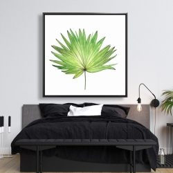 Framed 48 x 48 - Petticoat palm