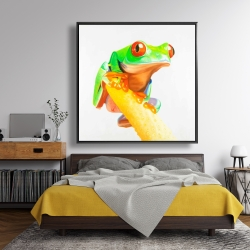 Framed 48 x 48 - Curious red eyed frog
