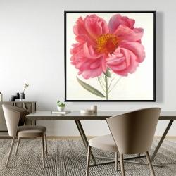 Framed 48 x 48 - Pink peony flower