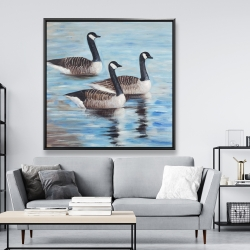 Framed 48 x 48 - Canada geese in water