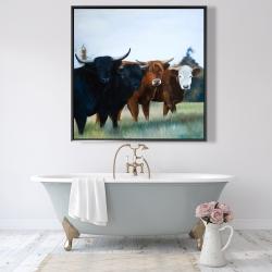 Framed 48 x 48 - Four highland cows