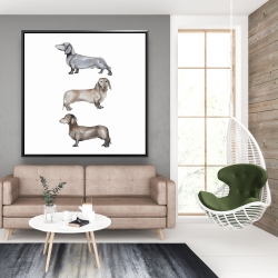 Framed 48 x 48 - Small dachshund dog