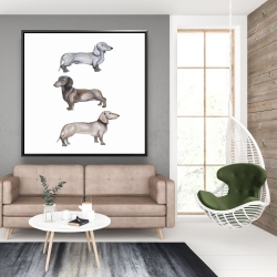 Framed 48 x 48 - Dachshund dogs