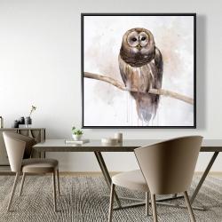 Framed 48 x 48 - Barred owl
