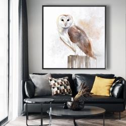 Framed 48 x 48 - Barn owl