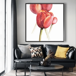 Framed 48 x 48 - Blossoming tulips closeup