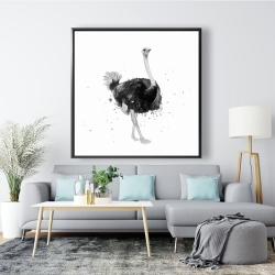 Framed 48 x 48 - Proud ostrich