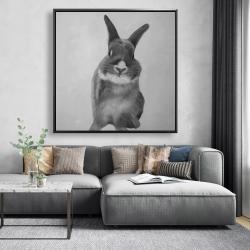 Framed 48 x 48 - Funny gray rabbit