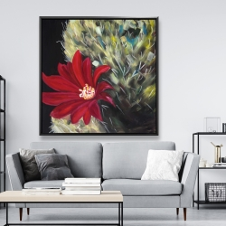 Framed 48 x 48 - Echinopsis red cactus flower