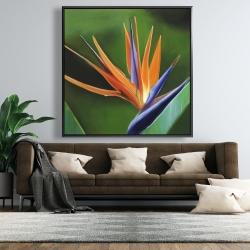 Framed 48 x 48 - Bird of paradise flower