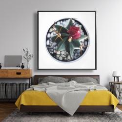 Framed 48 x 48 - Cactus in pot