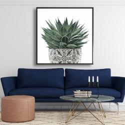 Framed 48 x 48 - Zebra plant succulent