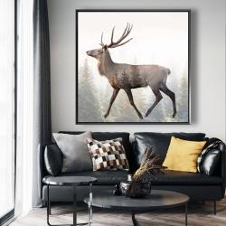 Framed 48 x 48 - Large plume roe deer