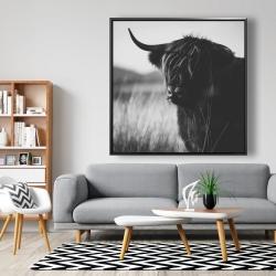 Framed 48 x 48 - Beautiful monochrome highland cow