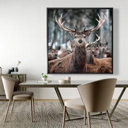 Framed 48 x 48 - Stags