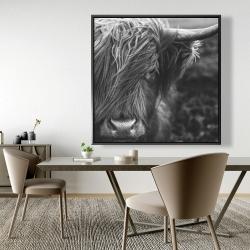 Framed 48 x 48 - Monochrome portrait highland cow