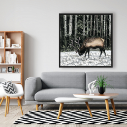Framed 48 x 48 - Caribou in the forest