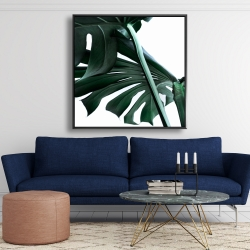 Framed 48 x 48 - Monstera deliciosa