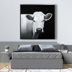 Framed 48 x 48 - White cow