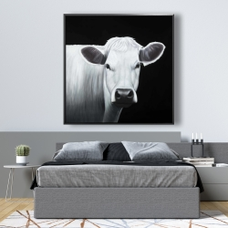 Framed 48 x 48 - White cow