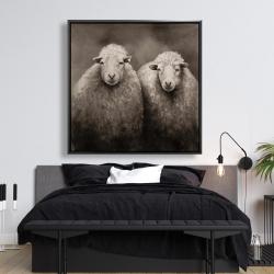 Framed 48 x 48 - Sheep sepia