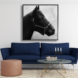 Framed 48 x 48 - Gallopin the horse