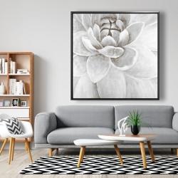 Framed 48 x 48 - Delicate white chrysanthemum