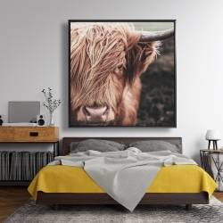 Framed 48 x 48 - Desaturated highland cow