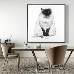 Framed 48 x 48 - Blue eyes fluffy siamese cat
