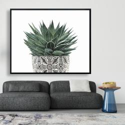 Framed 48 x 60 - Zebra plant succulent