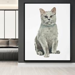 Framed 48 x 60 - British shorthair cat