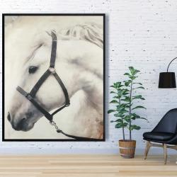 Framed 48 x 60 - Darius the white horse