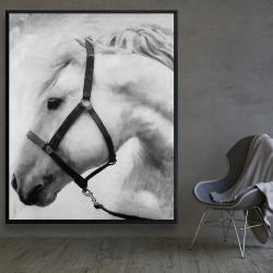 Framed 48 x 60 - Darius the horse