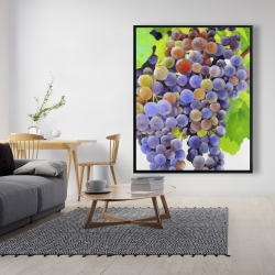 Framed 48 x 60 - Bunch of grapes