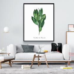Framed 48 x 60 -  bay leaves bundle - fr