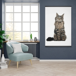 Magnetic 28 x 42 - Maine coon cat