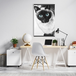 Magnetic 20 x 30 - Blue eyes siamese cat