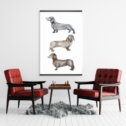 Magnetic 28 x 42 - Small dachshund dog