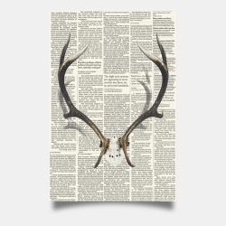 Poster 24 x 36 - Deer horns with newspaper background