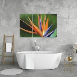 Canvas 24 x 36 - Bird of paradise flower