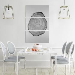 Canvas 24 x 36 - Grayscale oval shaped tree slab