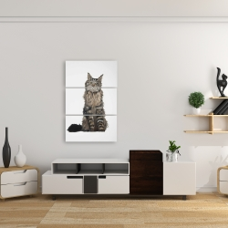 Canvas 24 x 36 - Maine coon cat