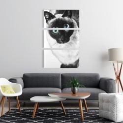 Canvas 24 x 36 - Blue eyes siamese cat