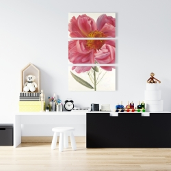 Canvas 24 x 36 - Pink peony flower