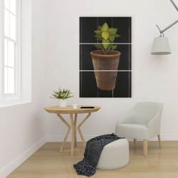 Canvas 24 x 36 - Plant of bay leaves