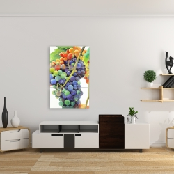 Canvas 24 x 36 - Colorful bunch of grapes